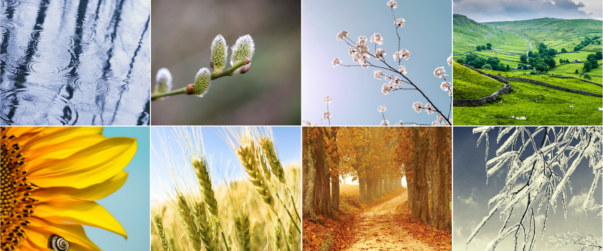 Two rows of four pictures each representing the seasons. Top row: A rain puddle with drops, a willow catkin, cherry blossoms, rolling green hills. Bottom row: A sunflower head, wheat heads, a dirt road strewn with autumn leaves, an ice coated branch.